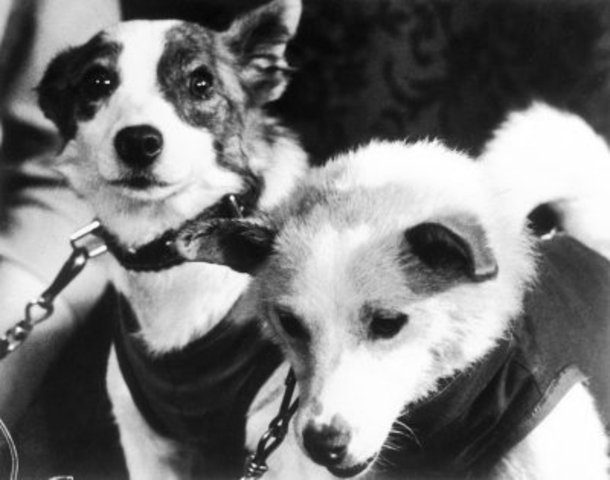 The first animals launched in space and survived