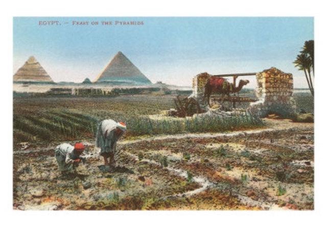 BC Organized Farming begins (Geo)