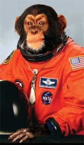 The first Hominidae launched in space [survived]