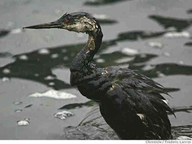 BP derrame de petróleo