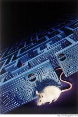 Edward C.Tolman : Estudio con ratas