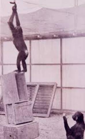 Investigacion con chimpances