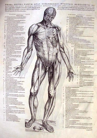 Vesalius Publishes 'On the Fabric of the Human Body'