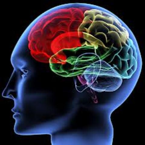 Cognitive: Brain Slow Down