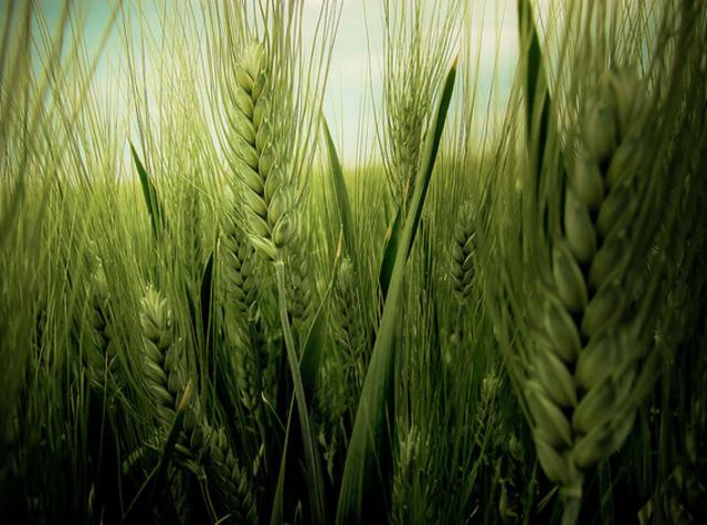Política agrícola común.