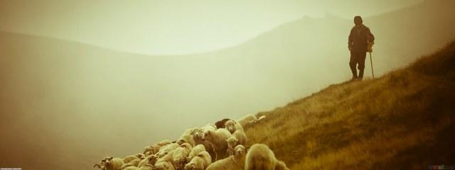 Muhammad works as a shepherd