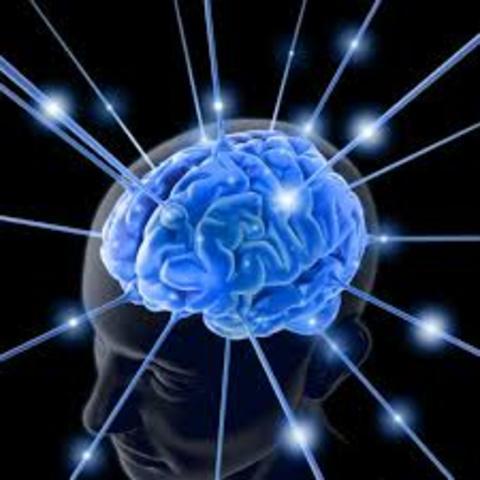 Adulthood: Cognitive Intelligence.