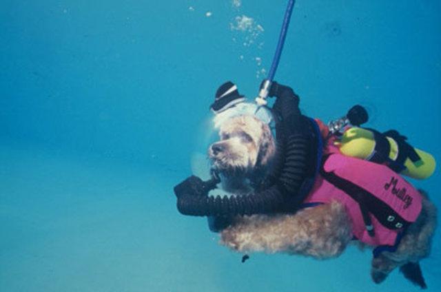 Canine Scuba Diving Apparatus