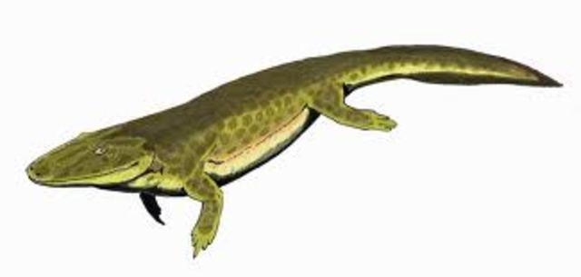 Tetrapods Evolve