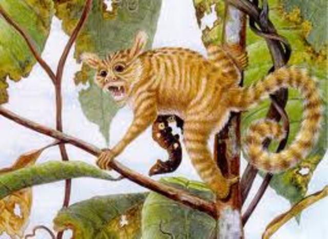 Primates Evolve