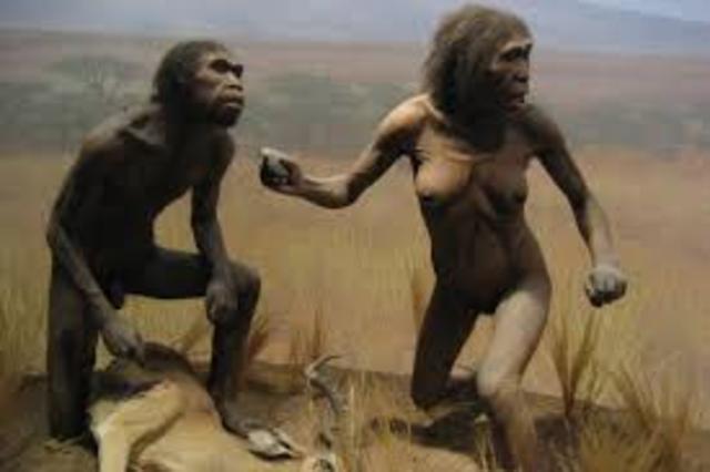 Homo Ergaster Evolves