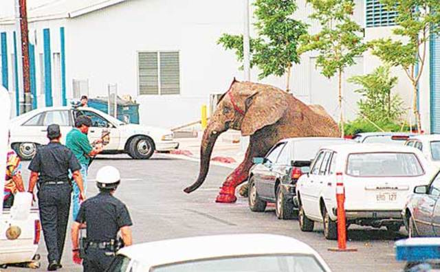 Tyke the elephant goes on a rampage.