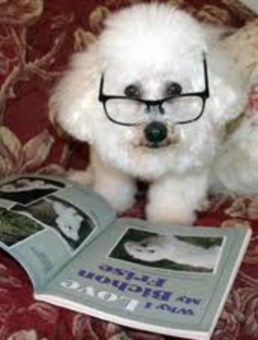 Edward Thorndike's animal intelligence article