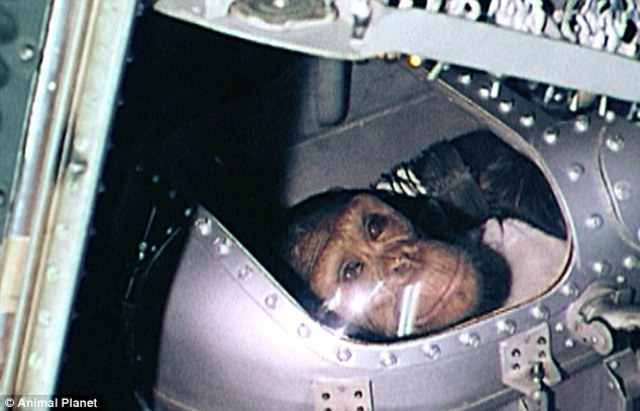 Ham the monkey is launched into Space