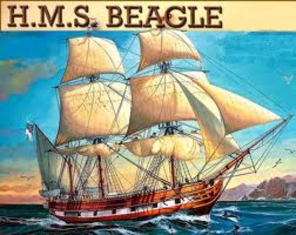 A bordo del Beagle