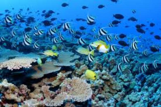 Publica sus estudios sobre arrecifes coralinos
