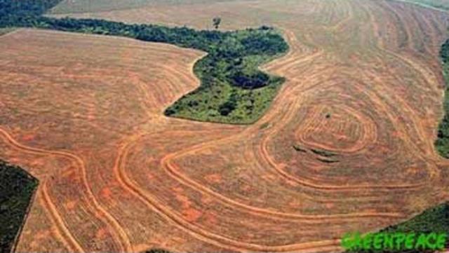 Selva amazonica en peligro.