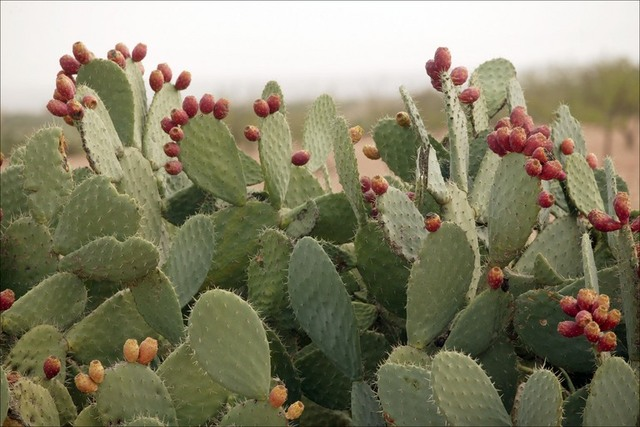 A Plant Profoundly Affects the Expedition