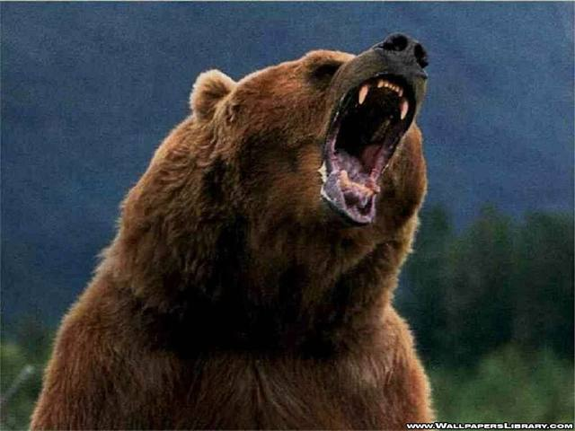 The Grizzly encounter.
