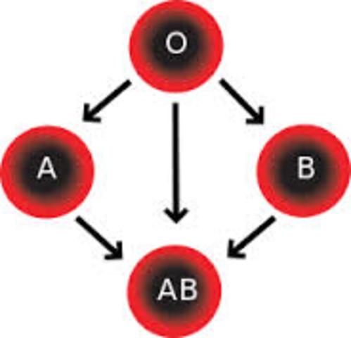 Blood Groups