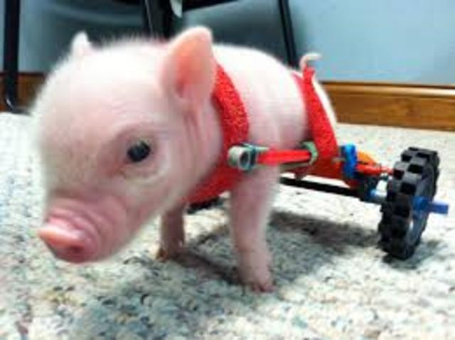 Chris P. Bacon the Piglet