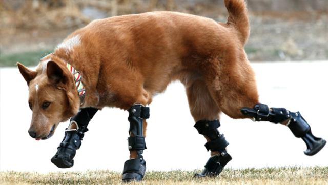 Nakio the Dog