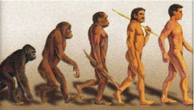 """""""EVOLUCION PRIMATES-HOMBRE"""" 2 MILLONES DE AÑOS"""