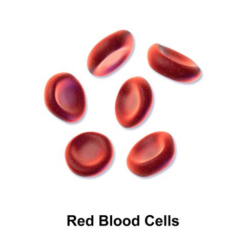 CE. Description of red blood cells