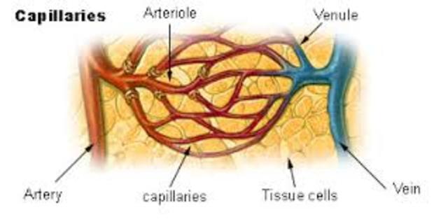 Capillary System