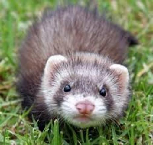 My first pet :D