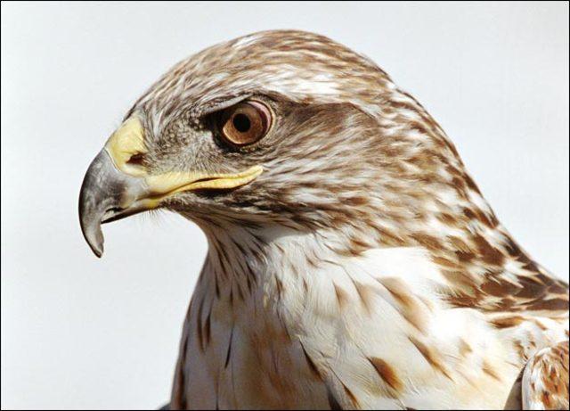 War Hawks Take Power