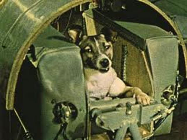 USSR launches Sputnik 2 which carried a small dog named Laika into orbit.