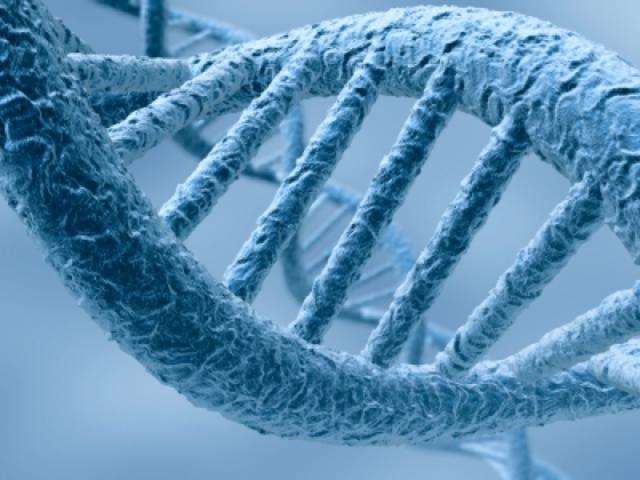 Descubrimiento: estructura de la molécula de ADN.