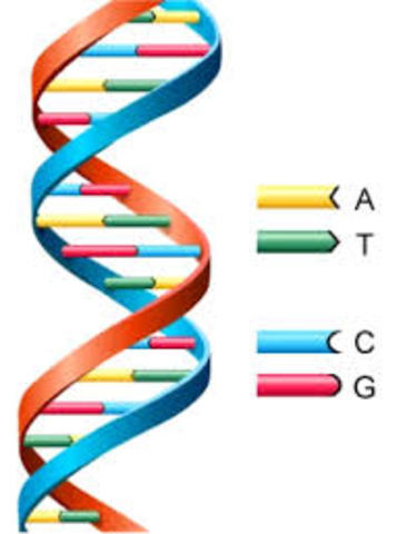 The first beginnings of the discovery of DNA