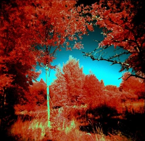 Kodak Color Negative Film