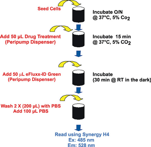 Automated fluorescence