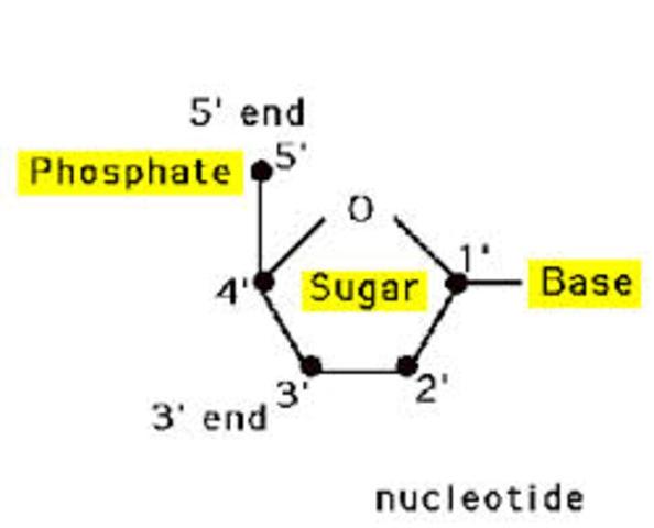 DNA Inheritance