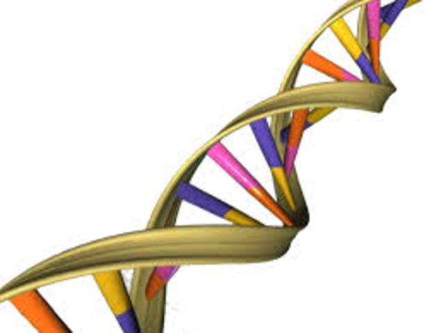 Viruses Replicate using DNA