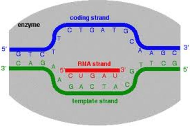 RNA and gene expression