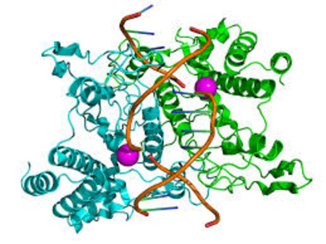 Bacterial restriction enzymes and DNA