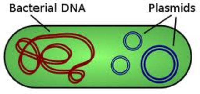 Purified Plasmids