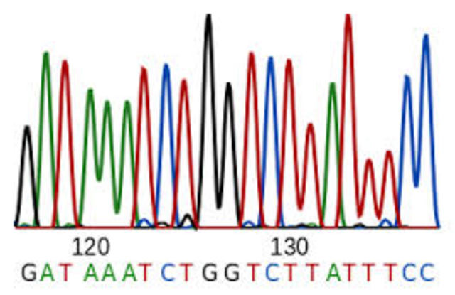 Sequence DNA