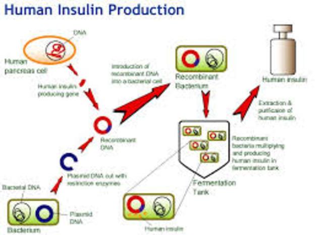 Insulin Gene inside bacteria