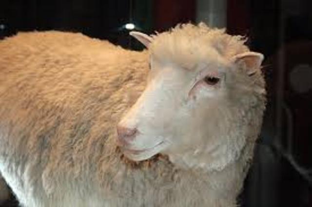 Cloning of a sheep