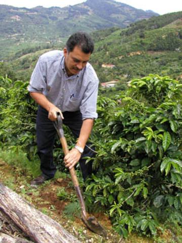 Costa Rica begins to export coffee