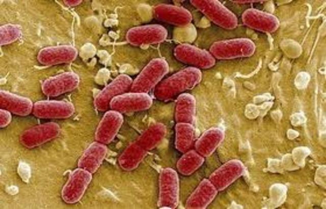 Secuencian el genoma de una bacteria
