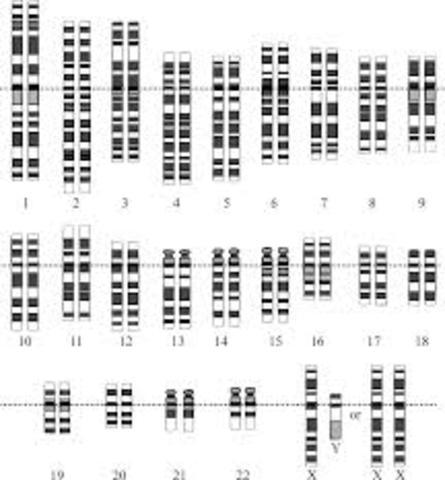 Se logra el primer borrador del genoma humano.