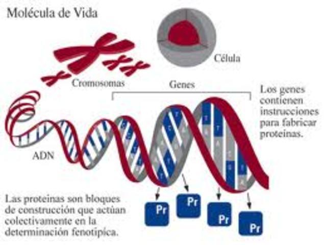 (Haemophilus influenzae).