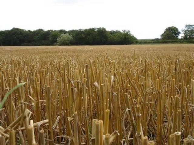 Eurpean Agricultural Revolution
