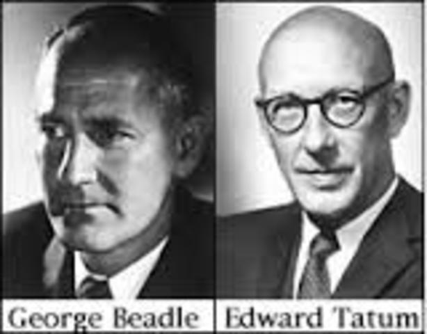"""George Beadle y Edward Tatum  proponen la hipótesis """"un gen, una enzima""""."""